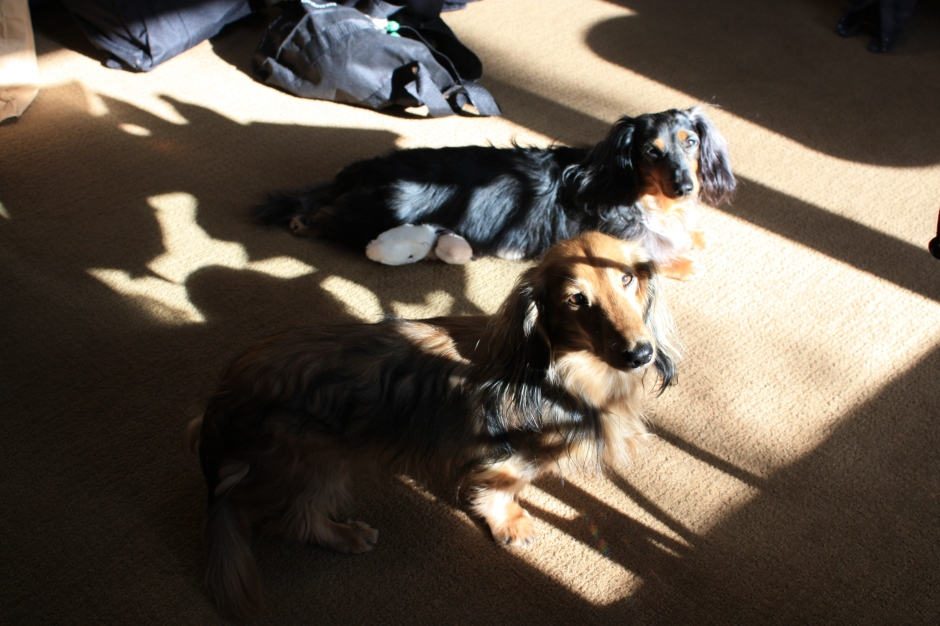 Chester and Cashmere loved the cabin too