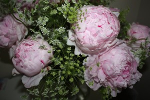 PNE Home Peonies and Queen Anne's Lace