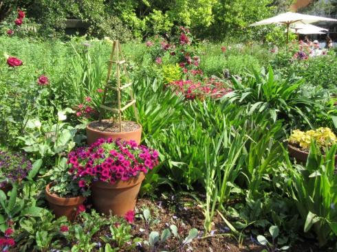 Cherise garden photo sue womersley