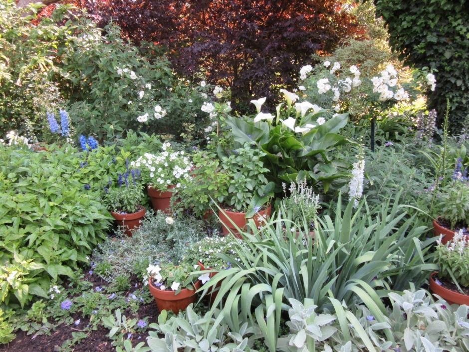 Whites garden photo sue womersley