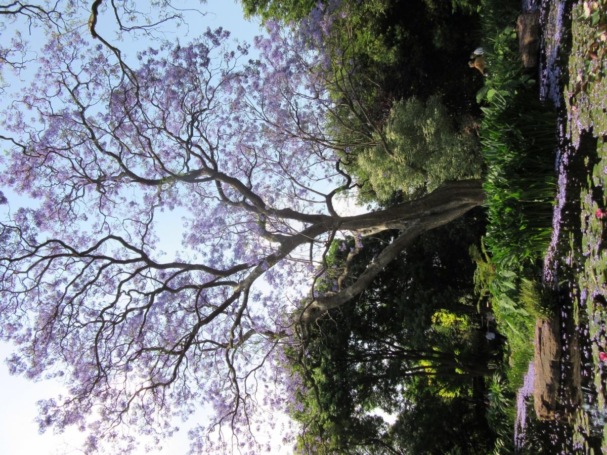 Beechwood Gardens, Johannesburg, South Africa