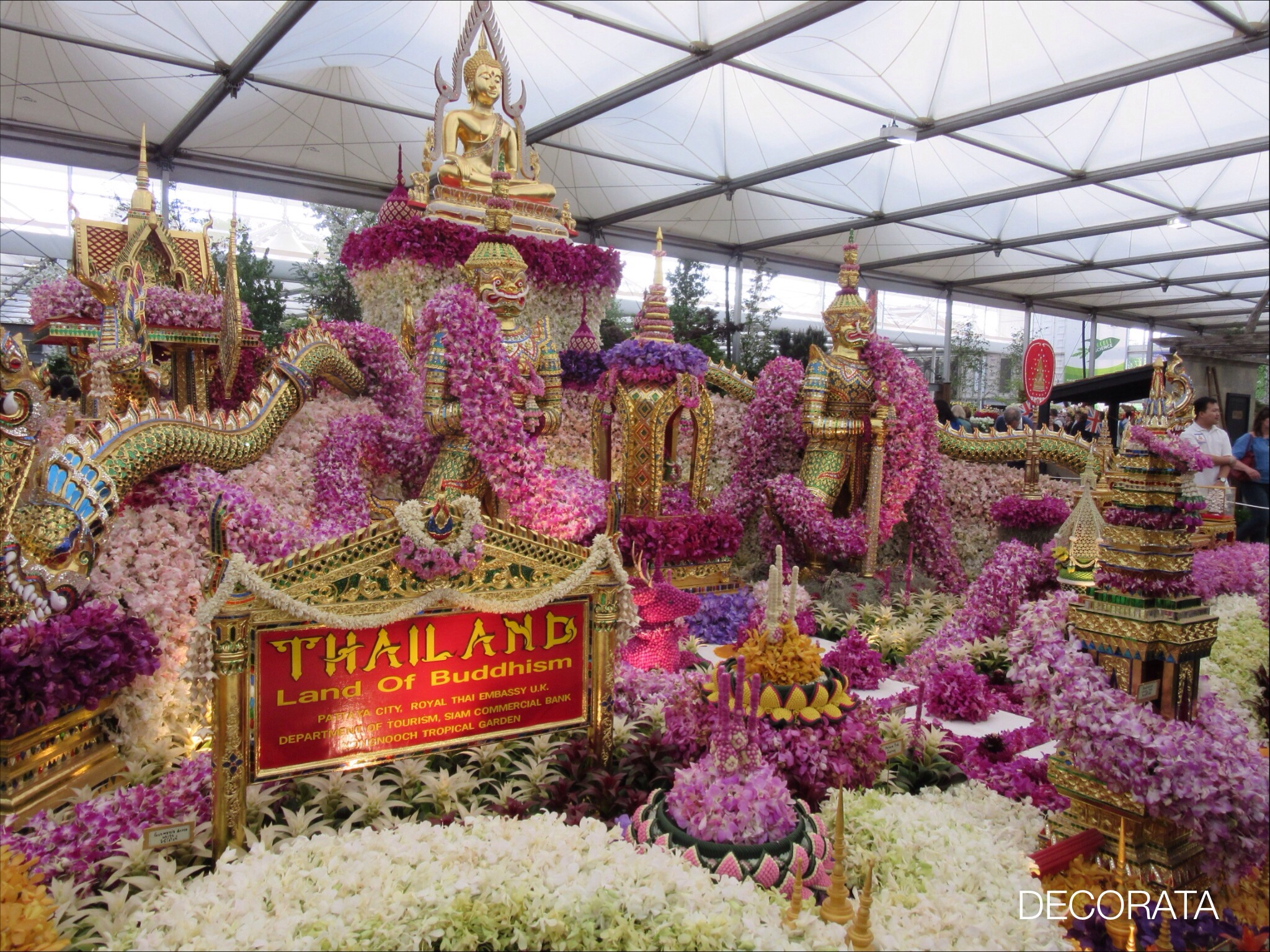 RHS Chelsea Flower Show, orchids, Decorata Design, sue womersley
