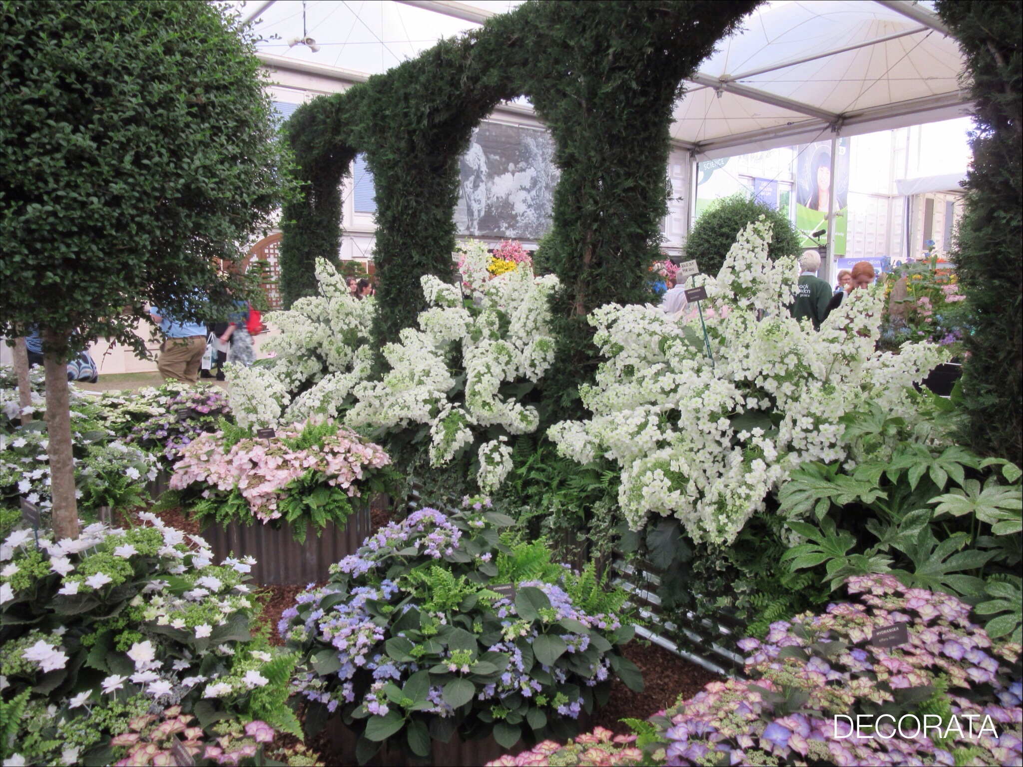 RHS Chelsea Flower Show, hydrangea, Decorata Design, sue womersley